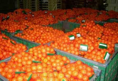 Перевозка фруктов и мандарин из Турции
