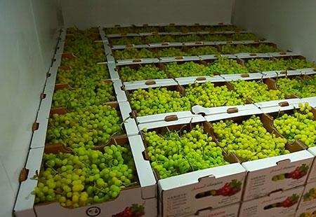 Перевозка винограда в изотерме