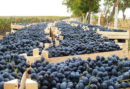 Перевозка винограда