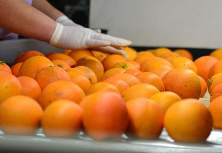 Температурный режим перевозки апельсинов и мандаринов
